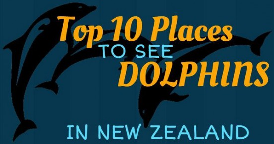 Top 10 Places to See Dolphins in New Zealand Title