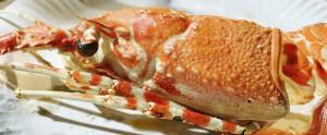 crab-638223_640