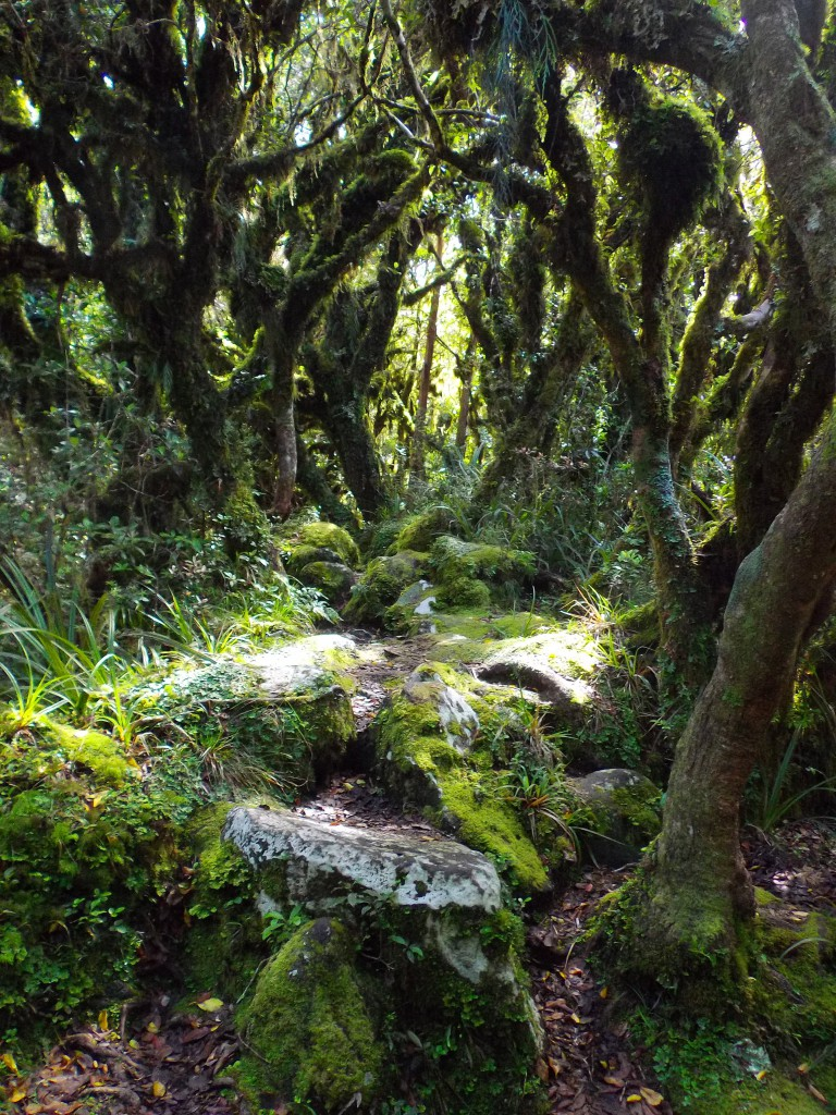 Goblin Forest, Egmont National Park, Taranaki by Abigail Simpson
