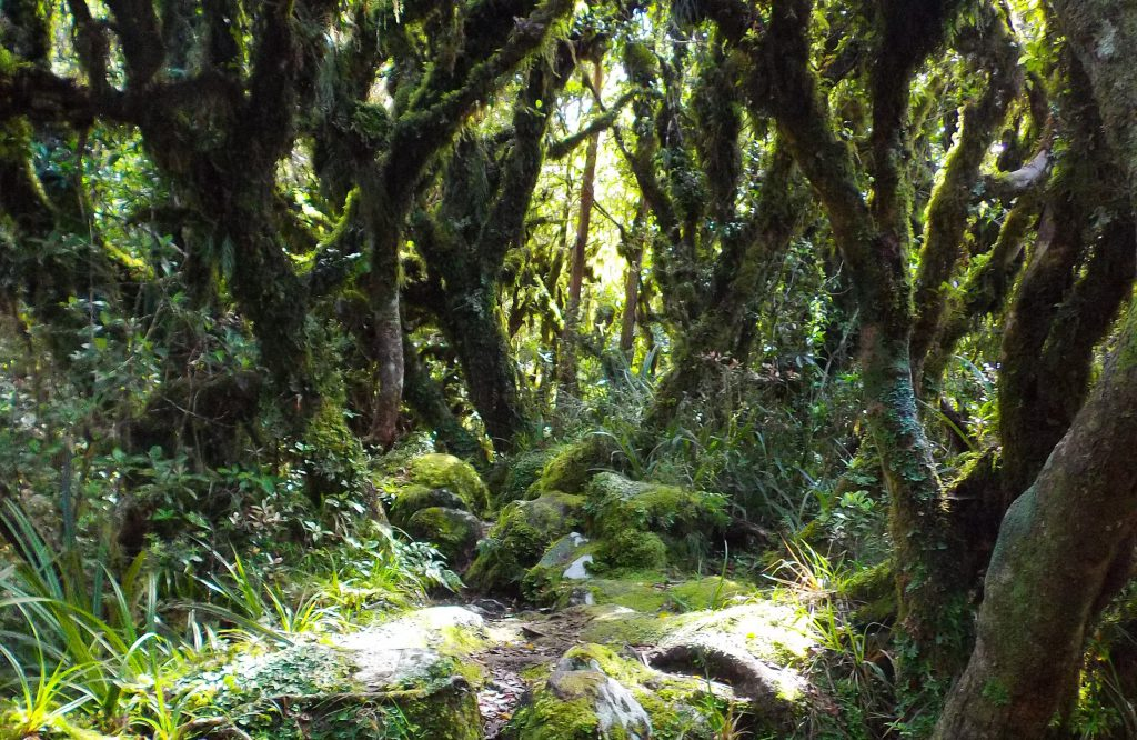 The Goblin Forest, Taranaki